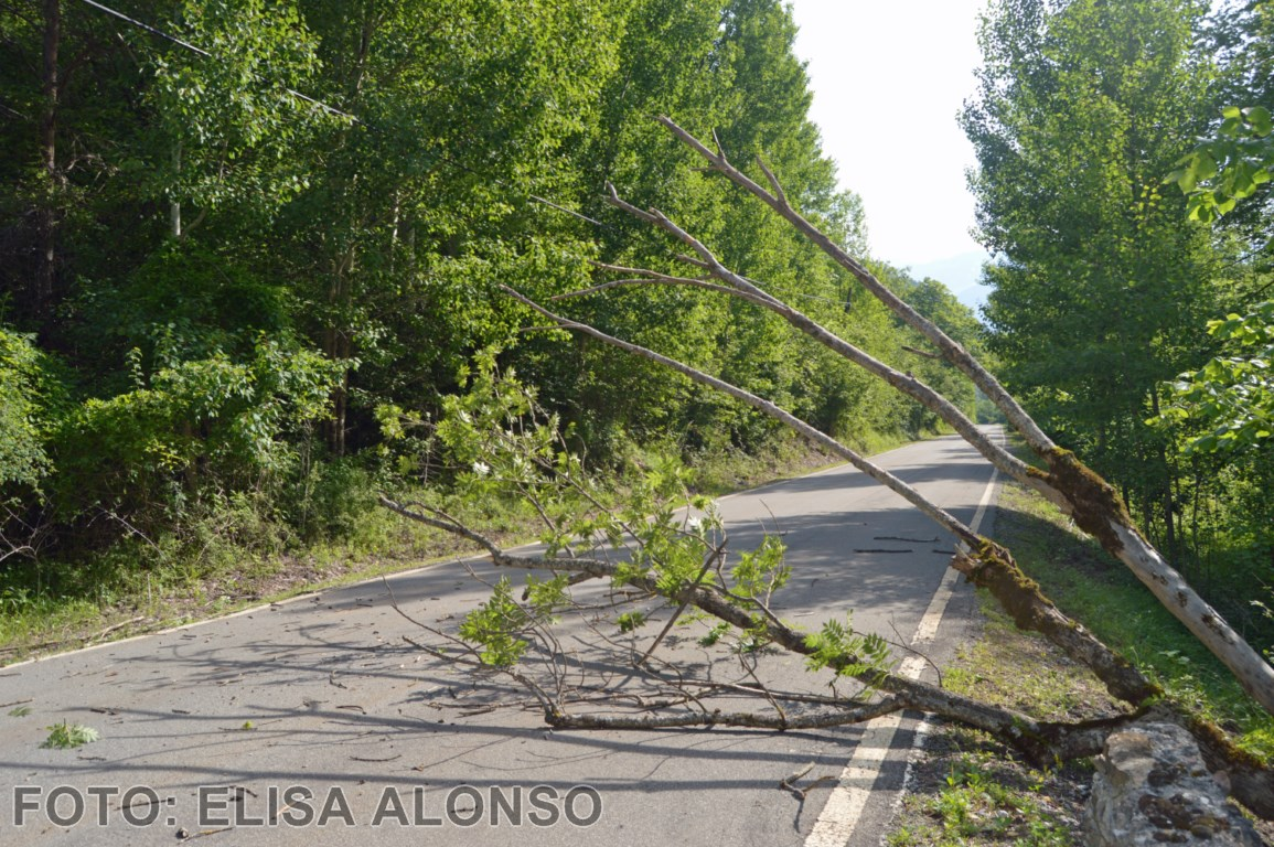 arbol en la carretera [1280x768]