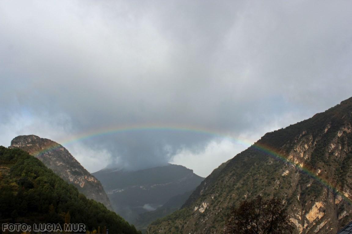 Bachaco arco iris (Copiar)