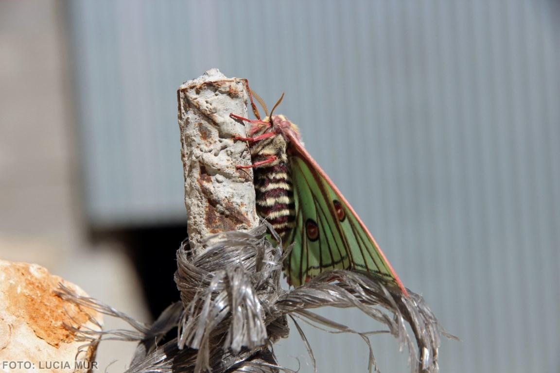 mariposa perfil (Copiar)