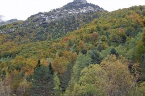 otoño en pineta (Copiar)