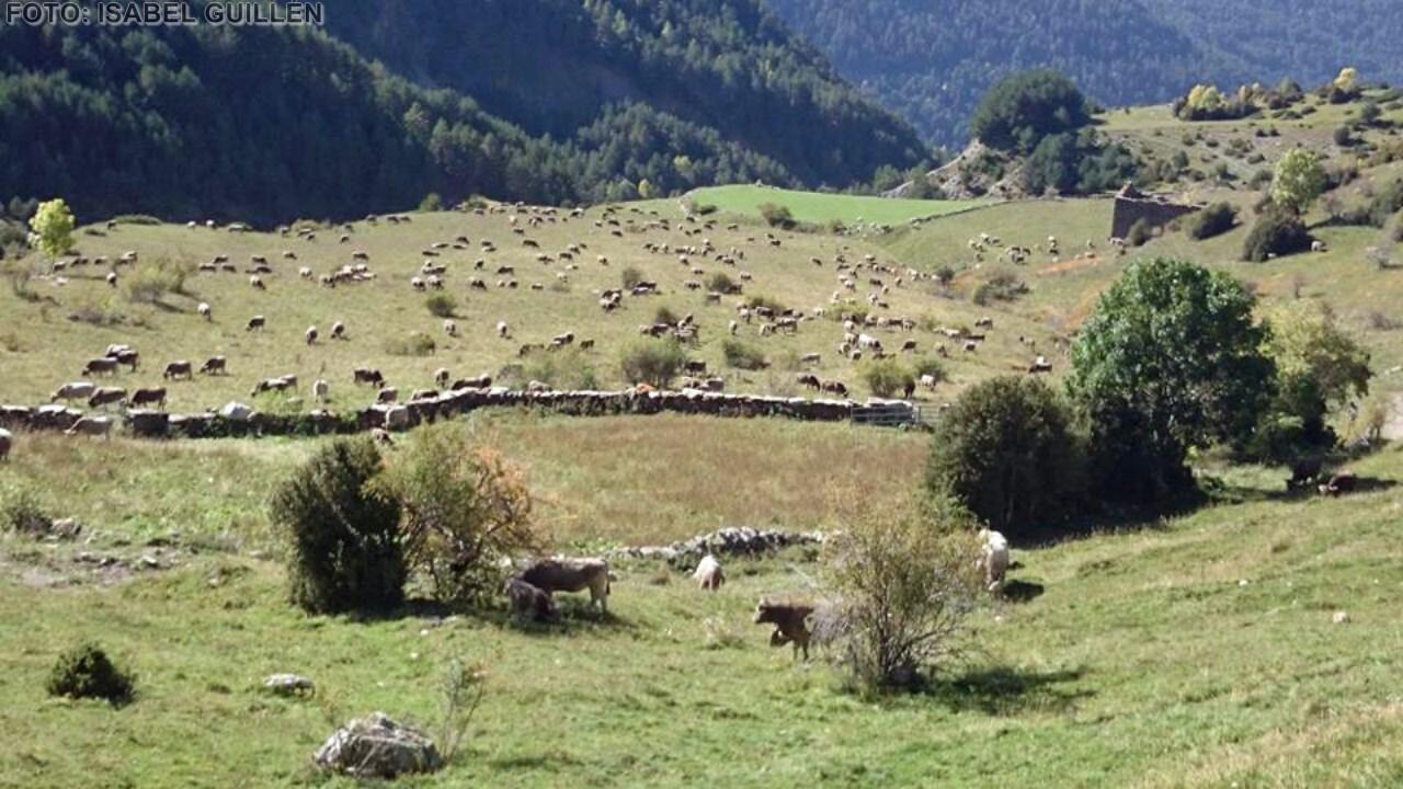 vacas (Copiar)