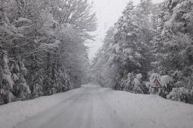 Pineta con casi 50 cm. de nieve.